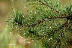 Branche et gouttes eau