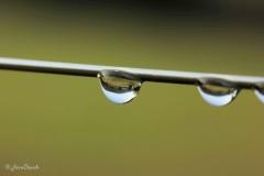 eau reflet gtte