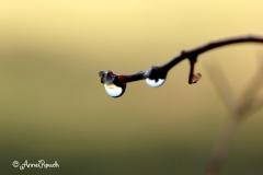 gouttes eau