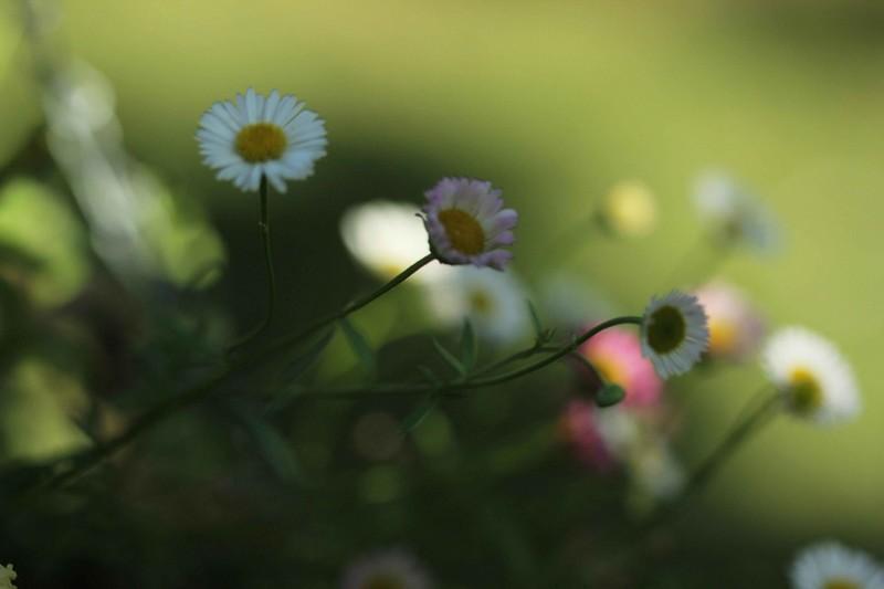 macros printemps (10)
