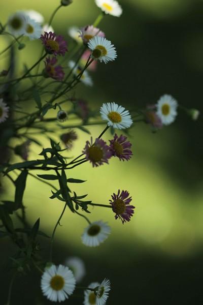 macros printemps (11)