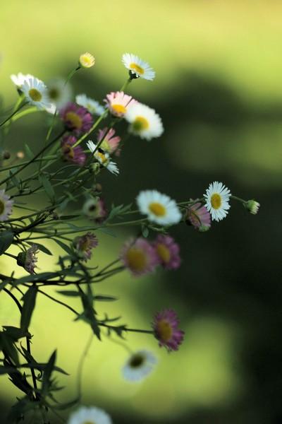 macros printemps (12)