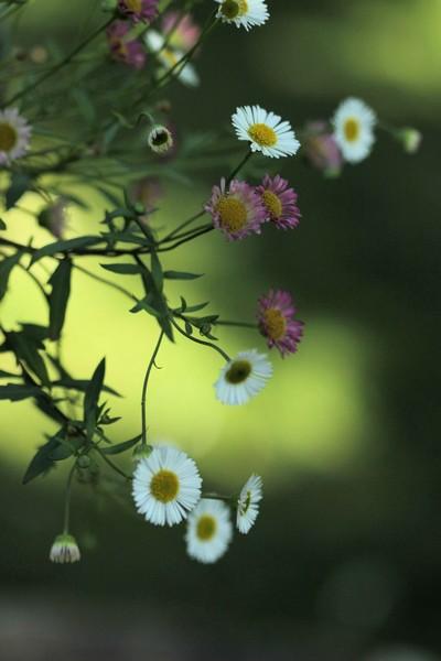 macros printemps (13)