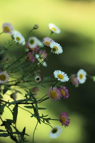 macros printemps (14)