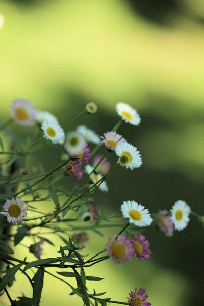 macros printemps (16)