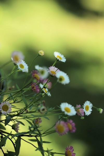macros printemps (17)