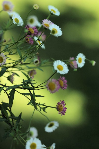 macros printemps (18)