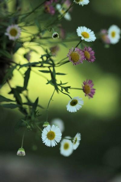 macros printemps (19)
