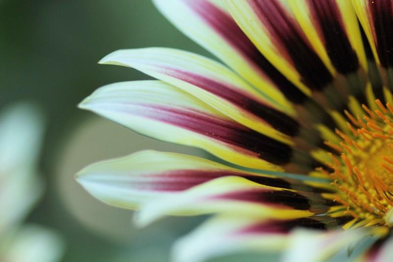 macros printemps (5)