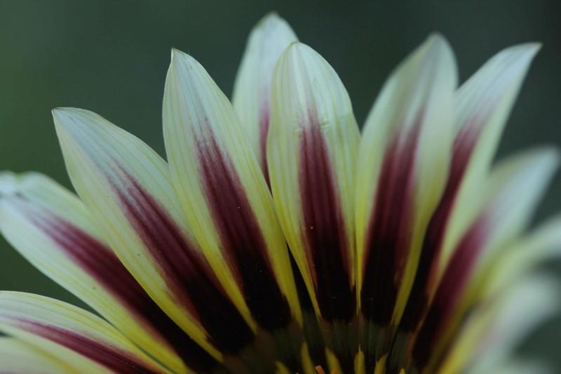 macros printemps (6)