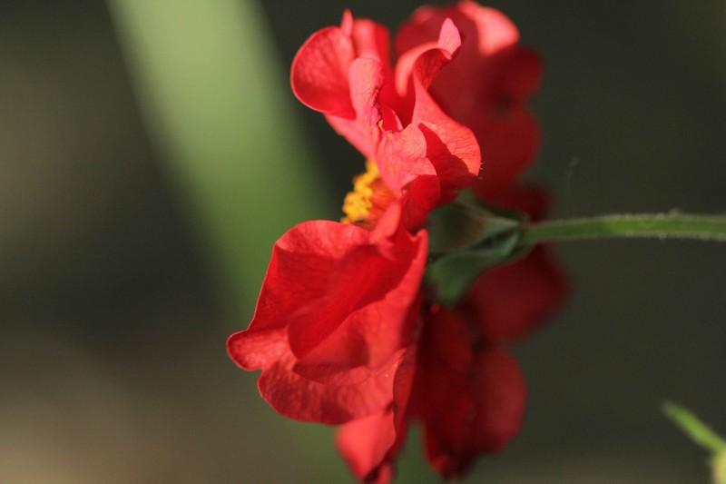 macros printemps (8)