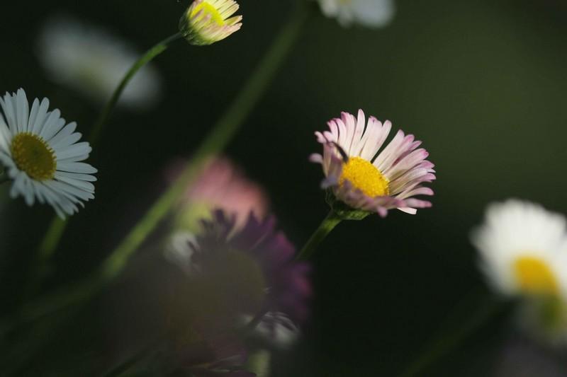macros printemps (9)