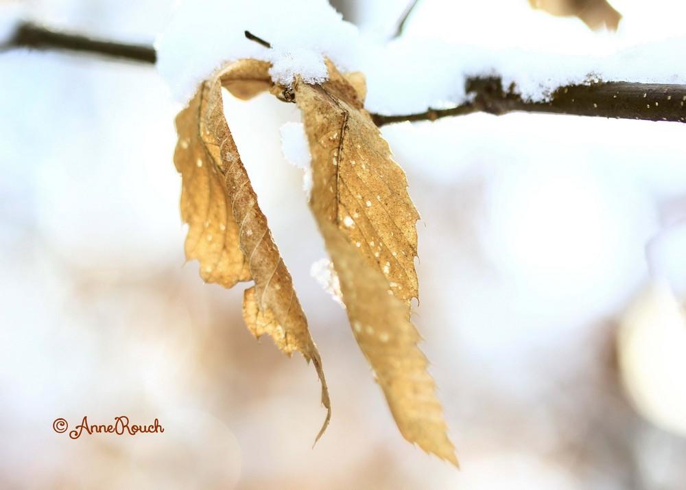 2 feuilles neige