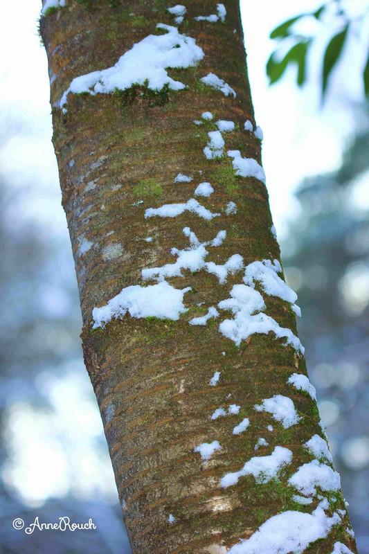 Tronc arbre neige