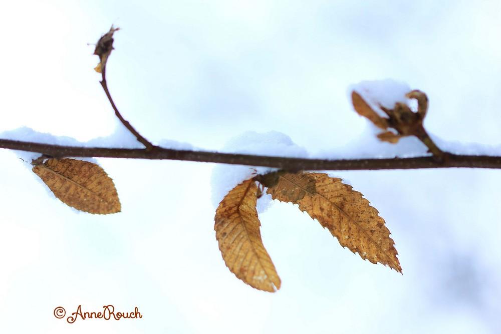 branche & neige