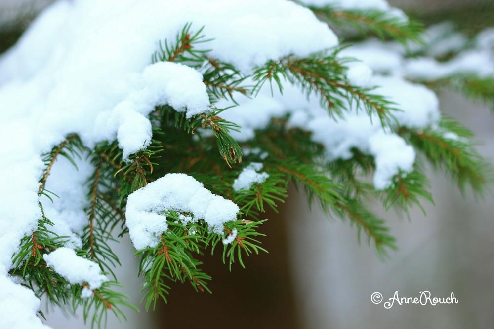 pin neige