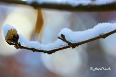 Transparence givre