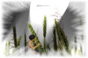 Elfe des blés2