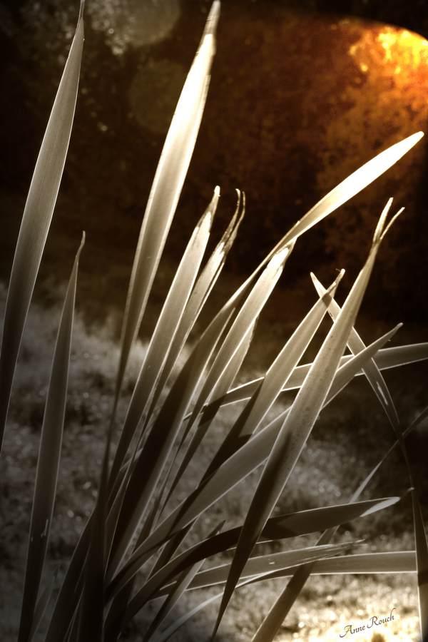 belles herbes