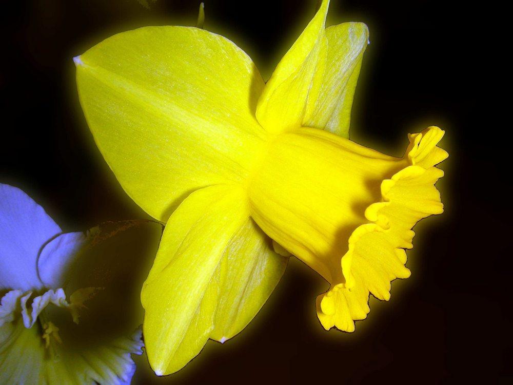Beauté jaune