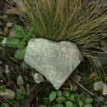 Coeur en forêt